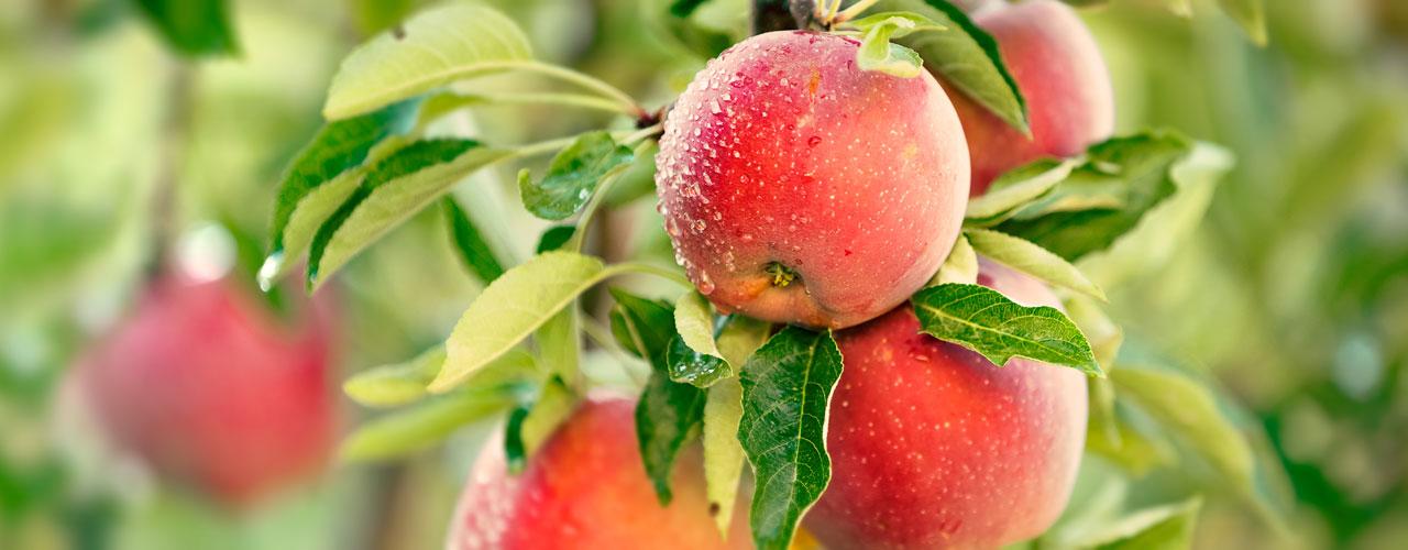 Fruit Packhouse – Central Otago